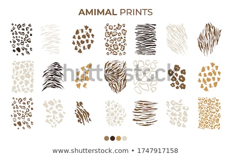 Jaguar Leopard animal safari skin leather texture. Vector illustration isolated on white background. Stock photo © kyryloff