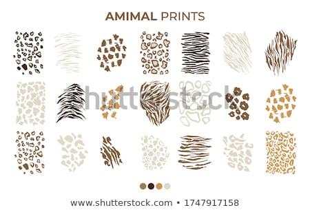 Stockfoto: Jaguar Leopard Animal Safari Skin Leather Texture Vector Illustration Isolated On White Background