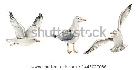 Sea Gull Stock photo © Dazdraperma