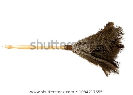 Feather Duster Stock photo © JamiRae