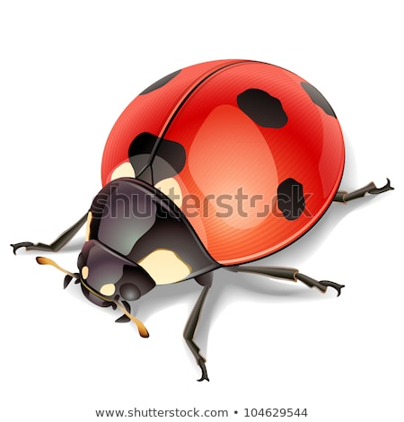 Beauty bug vector illustration icon Stock photo © Ggs
