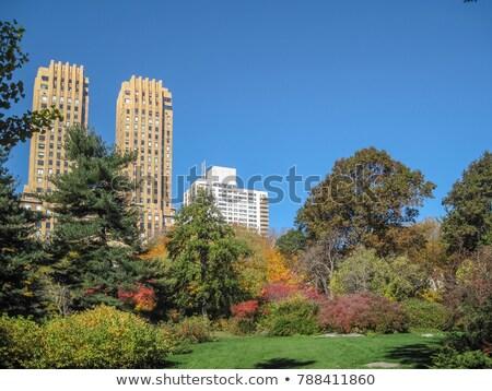 Aardbei velden Central Park New York City USA Stockfoto © phbcz