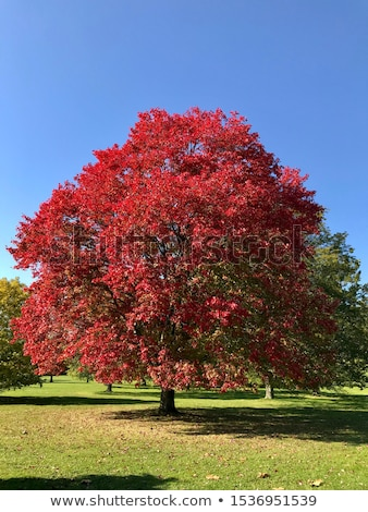Firey fall colors Stock photo © jsnover
