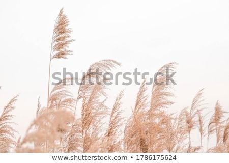 yeşil · bitkiler · mavi · gökyüzü · gökyüzü · arka · plan · yaz - stok fotoğraf © hofmeester
