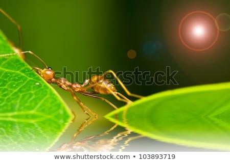 Vermelho formiga cansado trabalho duro fraco trabalhar Foto stock © sweetcrisis