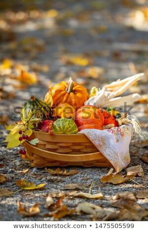 Napraforgó szabadtér közelkép egy növekvő bokeh Stock fotó © Pruser
