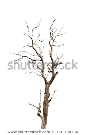 leafless tree branches silhouette stock photo © sirylok