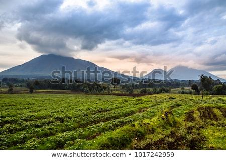 Vulkaan park Rwanda natuur reizen afrika Stockfoto © ajlber