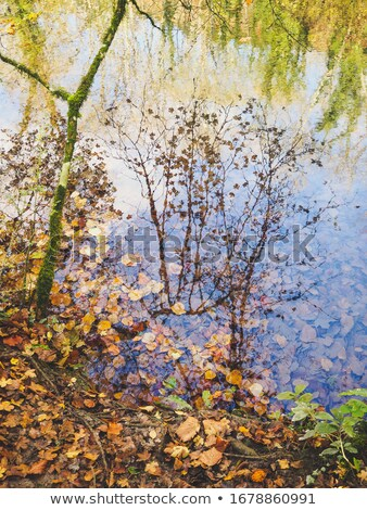 Autumn trees reflected in the water is beautiful stock photo © suliel