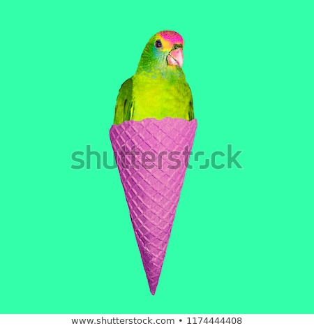 vicces · papagáj · diéta · rajzfilmfigura · izolált · fehér - stock fotó © RAStudio