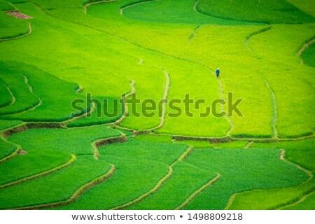 arrozal · Vietnã · água · árvore · natureza - foto stock © vak8888