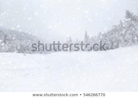 Inverno viajar nevasca carros carro Foto stock © markhayes