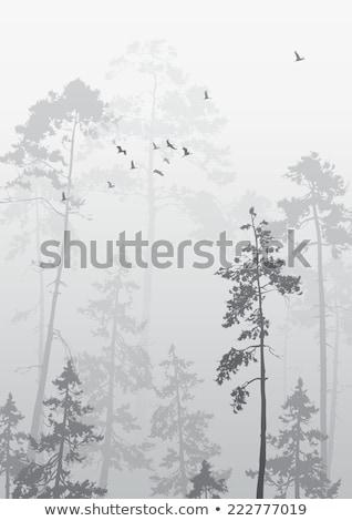 Stockfoto: Vector · najaar · landschap · vogels · bomen · hemel