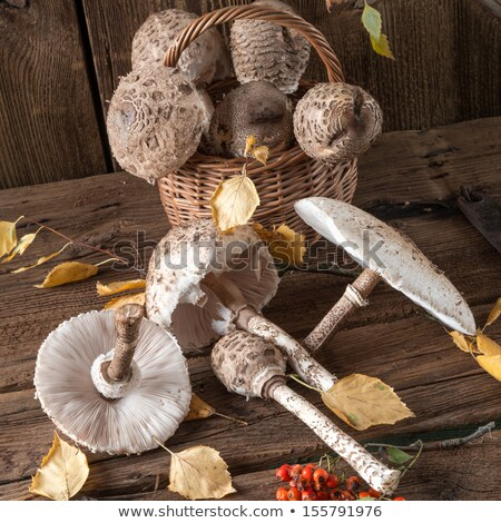 texture of a shaggy parasol mushroom cap stock photo © sarahdoow