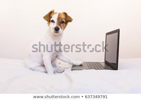 Stockfoto: Klein · laptop · puppy · hond · sharpei · uit