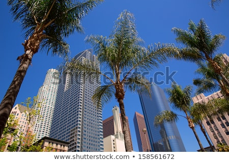 la · centrum · Los · Angeles · vierkante · palm · business - stockfoto © lunamarina
