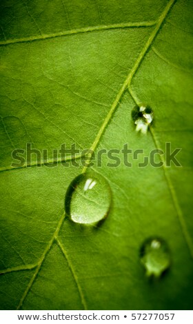 green leaf with water drops on it shallow dof stock photo © nejron