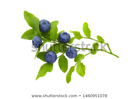 blueberry branch stock photo © es75