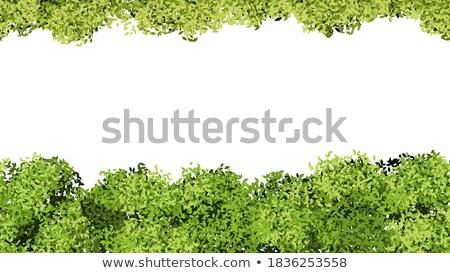 Groene bush naadloos textuur voorjaar landschap Stockfoto © tashatuvango