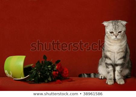 Kedi kırık pot çiçekler Stok fotoğraf © ddvs71