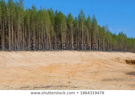 Ilegal arena paisaje pino forestales minería Foto stock © Andriy-Solovyov