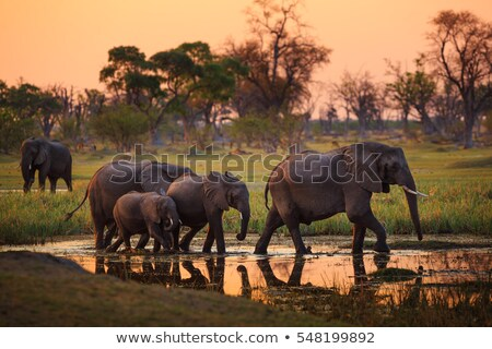 delta · elefant - imagine de stoc © prill
