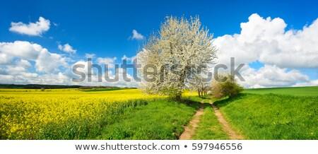 Estrada de terra campo árvores primavera paisagem céu Foto stock © AlisLuch