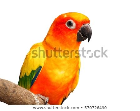 papagaio · animal · de · estimação · natureza · pássaro · branco · animal - foto stock © muang_satun