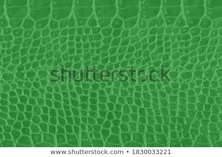 Green  Snake Stock photo © oblachko