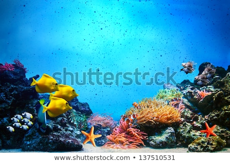 A group of yellow fishes under the sea Stock photo © bluering