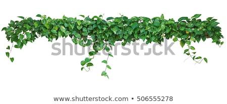 Heart planted green plant Stock photo © zurijeta
