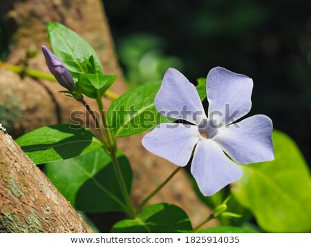 A floral margin with violet flowers Stock photo © bluering