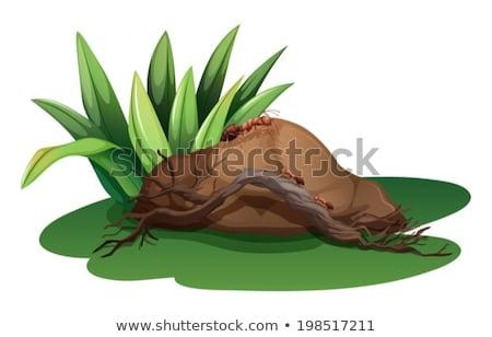 Rocha grama madeira formigas ilustração branco Foto stock © bluering