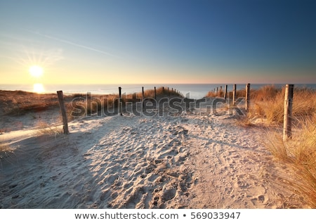 dunes and sea in holland Stock photo © compuinfoto