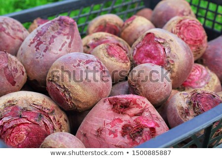 Beetrot In a Basket Stock photo © naffarts