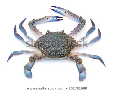 caranguejo · praia · ilustração · natureza · arte · subaquático - foto stock © bluering
