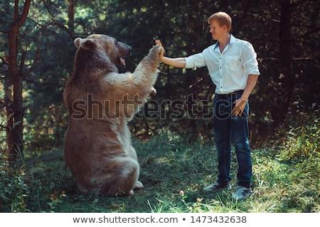 Férfi grizzly medve fehér férfi fehér illusztráció művészet Stock fotó © bluering