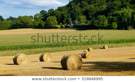 Rural landscape in the mountains. Haystacks dry hay in the field Stock photo © Kotenko