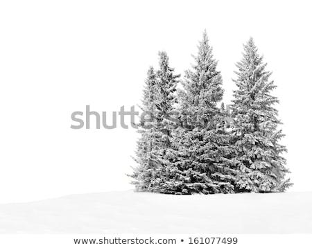 Pokryty świeże śniegu niebo drzewo Zdjęcia stock © IS2