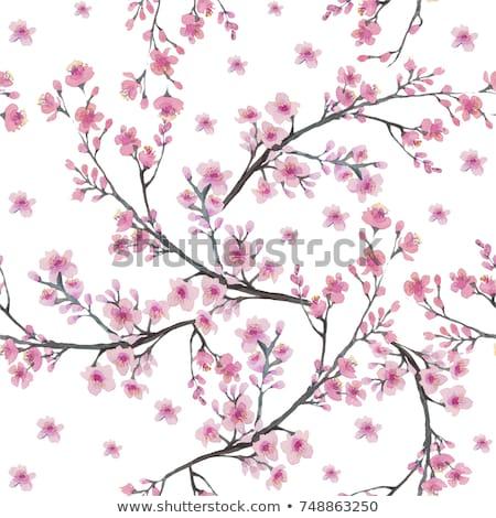 Peach Cherry Blossom Flower Pattern Design Element Stock photo © Krisdog