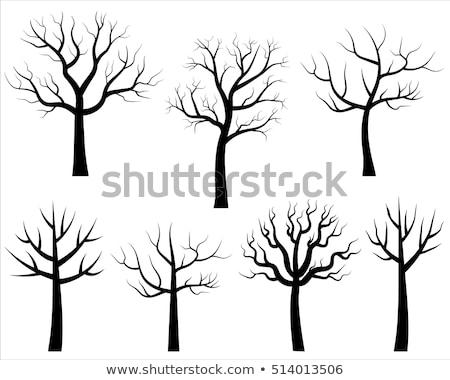Tree Without Leaves Vector Cartoon Illustration Stockfoto © Pravokrugulnik