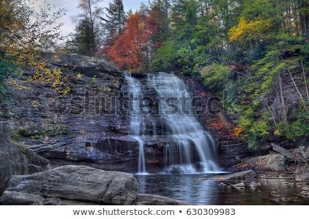 Maryland parku USA charakter drzew rzeki Zdjęcia stock © backyardproductions