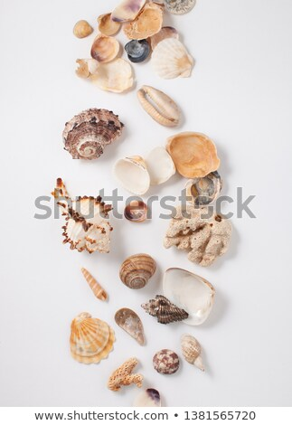Stock photo: Set of images of different types of marine and oceanic shells