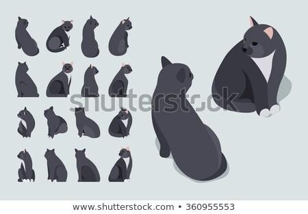 chat · fabuleux · isolé · longtemps · queue · animal - photo stock © popaukropa