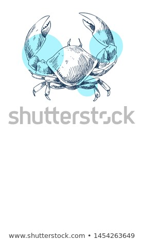 crab marine creature poster in sketch style with text stock photo © robuart