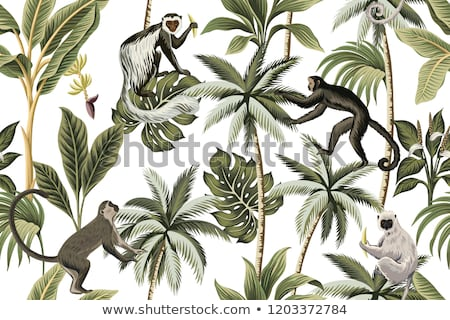 обезьяны джунгли Постоянный дерево лес пейзаж Сток-фото © colematt