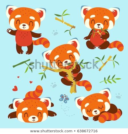 Set of red panda character Stock photo © colematt