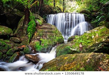 Rustig weelderig waterval rock verleden varens Stockfoto © lovleah