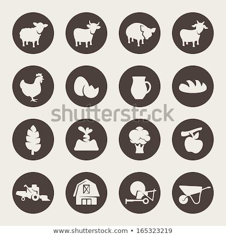 вектора · стиль · набор · сельскохозяйственных · животных · икона · веб - Сток-фото © robuart