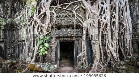 árvore raízes enorme arruinar paredes templo Foto stock © lichtmeister